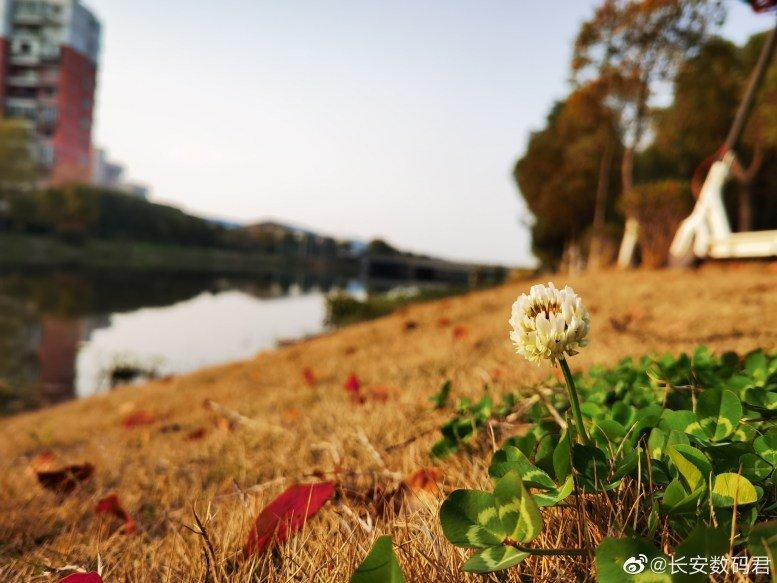 Huawei P40 Pro Kamerabeispiele